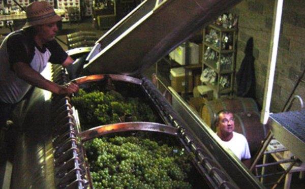 Cantina-Balter-Rovereto-lavorazione-uva