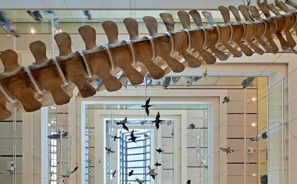 Museo-Scienze-Trento-esposizione
